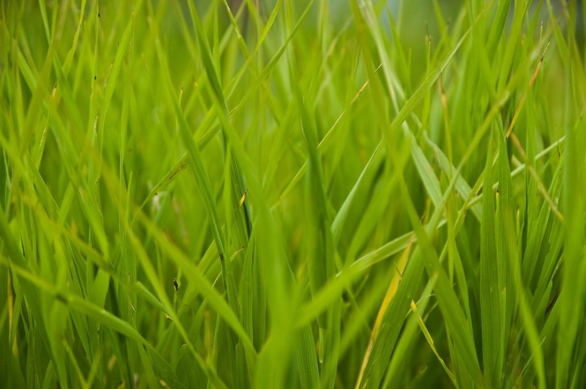 Pielęgnacja trawników – nawozy